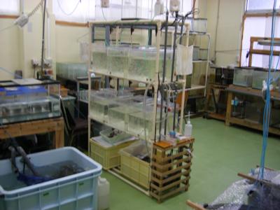 水生生物飼育室